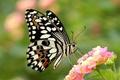 Картинка цветок, крылья, бабочка