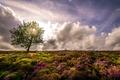 Картинка цветы, дерево, поле, солнце, небо, горизонт, облака