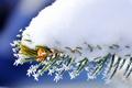 Картинка snow, macro, Branch, nature, spruce, winter