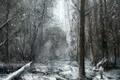 Картинка Рисунок, лес, снег, монстр