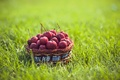 Картинка трава, еда, фрукты, корзинка, ранетки