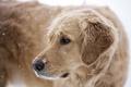 Картинка собака, снег, друг