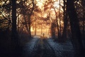 Картинка обработка, деревья, Into the light, лес, прохожий