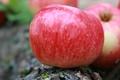 Картинка макро, фон, природа, обои, деревня, яблоко, фрукты, урожай, витамины, яблоки
