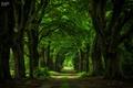 Картинка дорога, деревья, стволы, арка, аллея, гиганты
