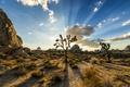 Картинка пейзаж, США, Национальный, парк Джошуа-Три