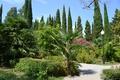 Картинка Цветы, Лето, Кипарис, Парк, Абхазия, Пальмы