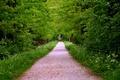 Картинка дорога, деревья, трава, лес, тропа
