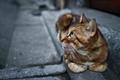 Картинка кошка, взгляд, котэ, ошейник, лапы, кот