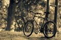 Картинка листья, деревья, природа, велосипед, фон, дерево, widescreen, обои, спорт, размытие, wallpaper, bicycle, разное, nature, широкоформатные, ...