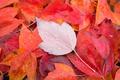 Картинка листва, осень, лист, макро
