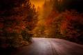 Картинка лес, осень, дорога