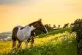 Картинка конь, лошадь, поле, природа