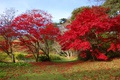 Картинка осень, лес, трава, листья, деревья, парк, красочно