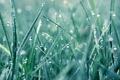 Картинка Роса, капли, трава