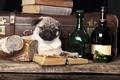 Картинка собака, чемодан, книги, бутылки, мопс