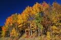 Картинка осень, небо, деревья, Autumn, Trees, Seasons