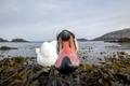 Картинка озеро, лебедь, птица