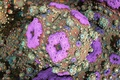 Картинка цвет, объем, свет, обои, кораллы