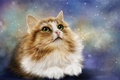 Картинка кошка, взгляд, рендеринг, фон, котэ, кот
