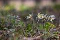 Картинка цветы, трава, весна, лес