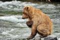 Картинка животное, медведь, хищник, молитва, Mariia Fomenko, вода, река, камни