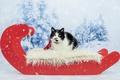 Картинка зима, лес, кошка, кот, взгляд, снег, красный, черно-белый, новый год, портрет, рождество, ели, пятна, лежит, ...
