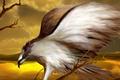 Картинка Птица, крылья, рисунок, орел