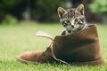 Картинка обувь, мордашка, зелень, котёнок, трава, кот