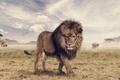 Картинка Animal, животное, Joshua Amenyo, носорог, саванна, слон, The Lion King, лев, photoshop, жираф