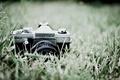 Картинка макро, фотоаппарат, фон, природа, Praktica, обои, зелень, фото, трава, объектив