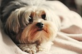 Картинка собаки, морда, фон, обои, собака, собачка, wallpapers