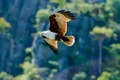 Картинка фон, хищник, птица, орел