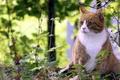 Картинка лето, природа, кот