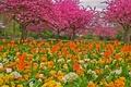 Картинка цветы, парк, сад, деревья, трава, тюльпаны