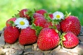Картинка лето, ягоды, клубника