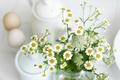 Картинка цветы, белый, ромашки, листья, растения