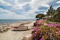 Картинка цветы, пальмы, лодка, Франция, деревья, берег, портулак, песок, море, Corsica, небо, горизонт, облака