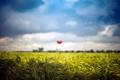 Картинка poppy, clouds.jpg, field, flower