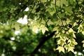 Картинка боке, ветки, зелень, Ветви, листья