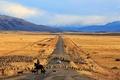 Картинка овцы, Чили, Патагония, дорога, машина