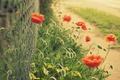 Картинка цветы, красный, зеленый, фон, сетка, widescreen, обои, забор, мак, размытие, ограда, ограждение, wallpaper, широкоформатные, background, ...