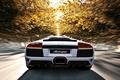Картинка Lamborghini, ламборгини, скорость, мурселаго, дорога, деревья, murcielago, lp640, солнце, белая, осень