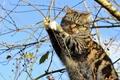 Картинка кошка, на дереве, ветки, дерево, кот