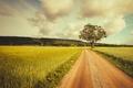 Картинка farmland, road, tree