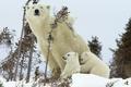 Картинка зима, медведь, медвежата