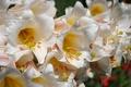 Картинка цветы, лилия, тычинки