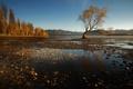 Картинка дерево, озеро, природа