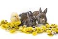 Картинка троица, крольчата, белый фон, верба, цыплёнок, кролики, детёныши