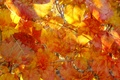 Картинка природа, осень, краски, линии, листья